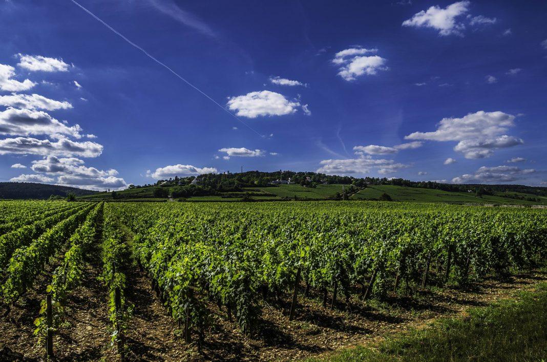 Visiter la Bourgogne : les meilleurs châteaux viticoles